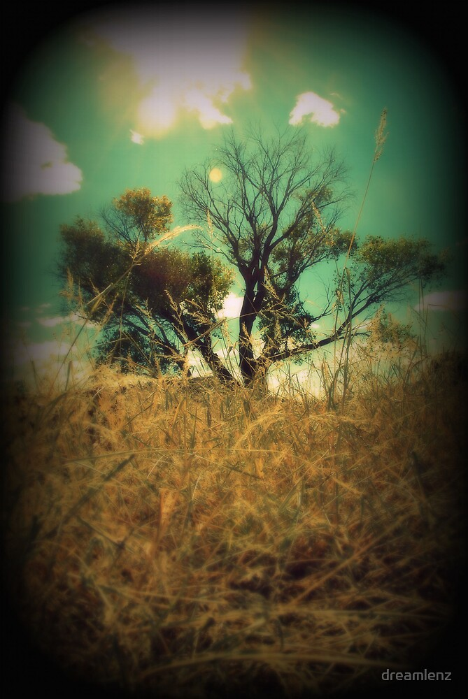 Tree of life II by dreamlenz