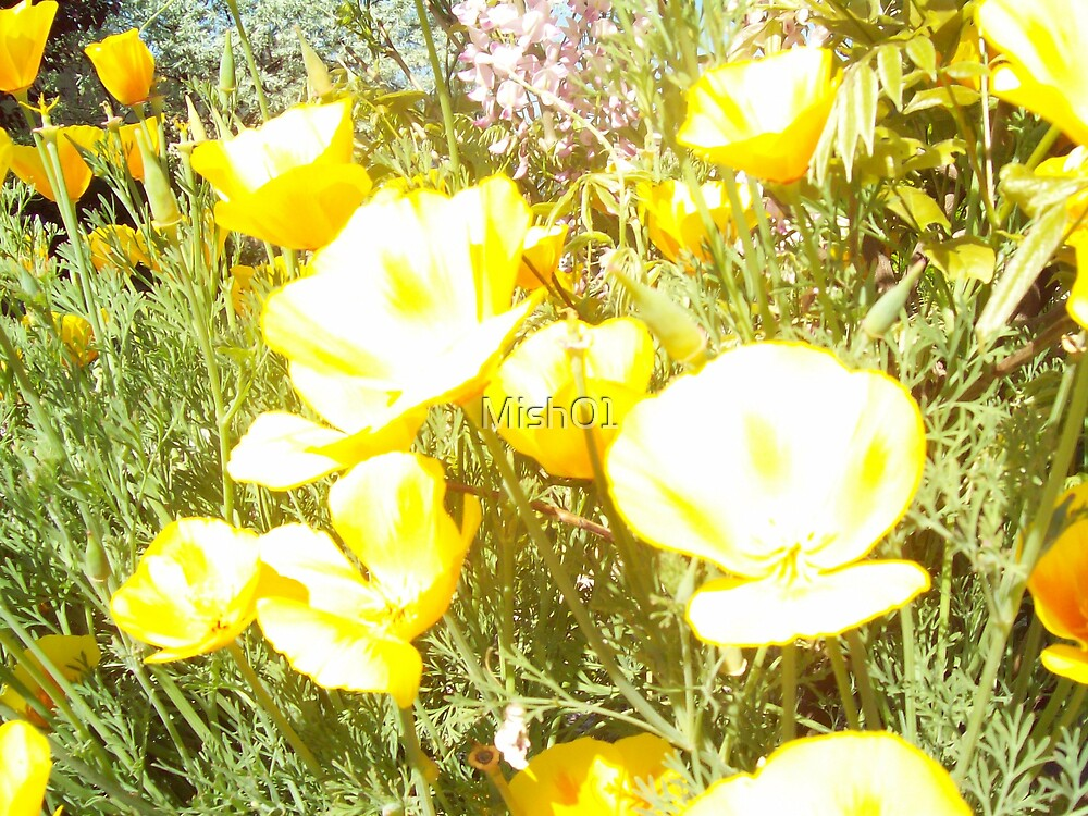 California Poppies  by Mish01