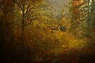 Fall forest splendor by Jeff Burgess