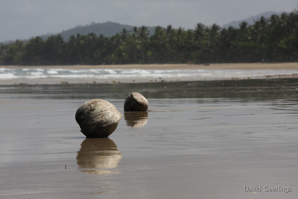 Coconuts on deserted beach by David  Geerlings