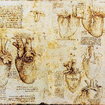 Heart And Its Blood Vessels from Leonardo da Vinci by BulganLumini