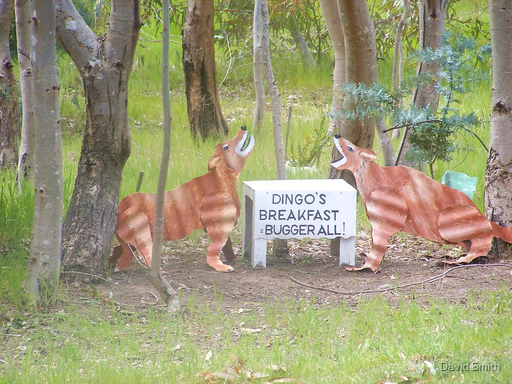 Aussy comedt a dingoes breakfast by David Smith