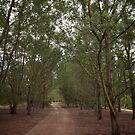 Tree lined path by Joel McDonald