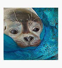 Seal Just a Peek Photographic Print