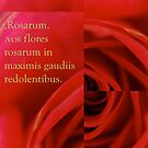 Rosarum by Soxy Fleming