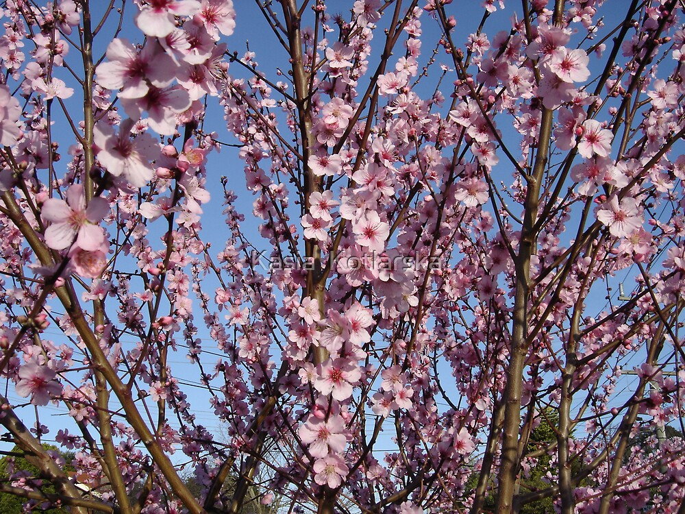 Spring by Kasia  Kotlarska