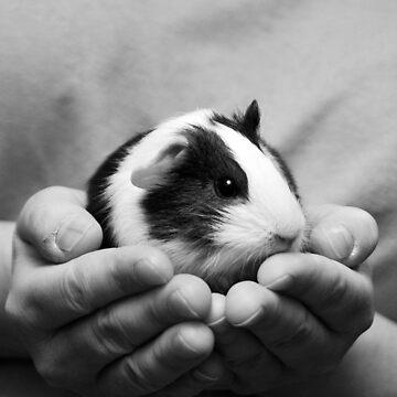 Cute Baby Guinea Pig by TrickiWoo