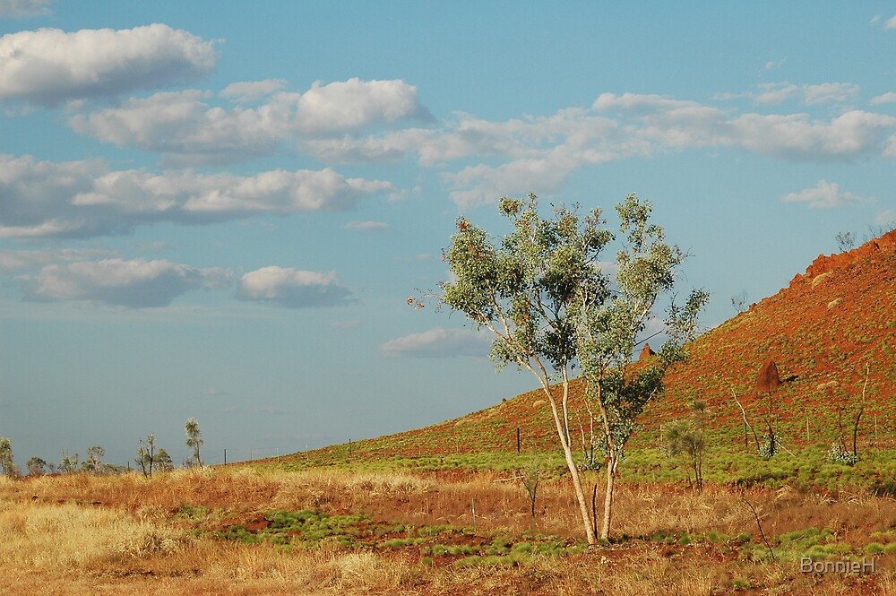 A fine day in the outback by BonnieH