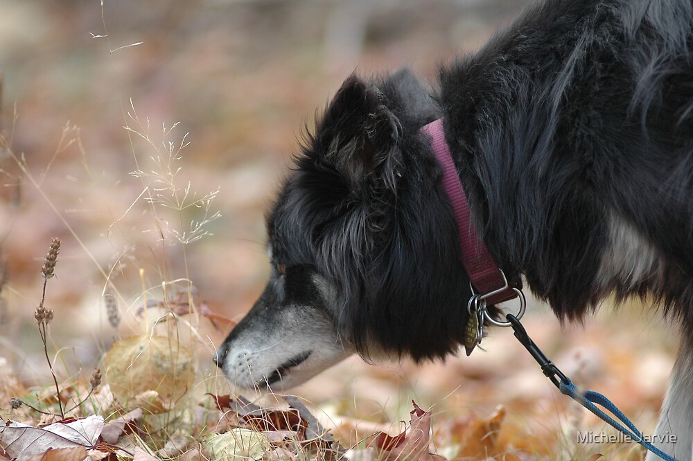 Sniffing by Michelle Jarvie