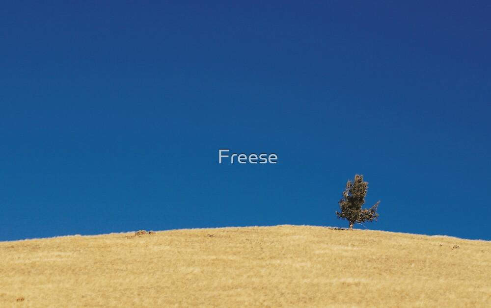 Lone Juniper by Freese