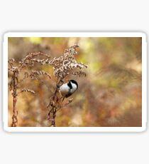 Chickadee At Goldenrod Feeder Sticker