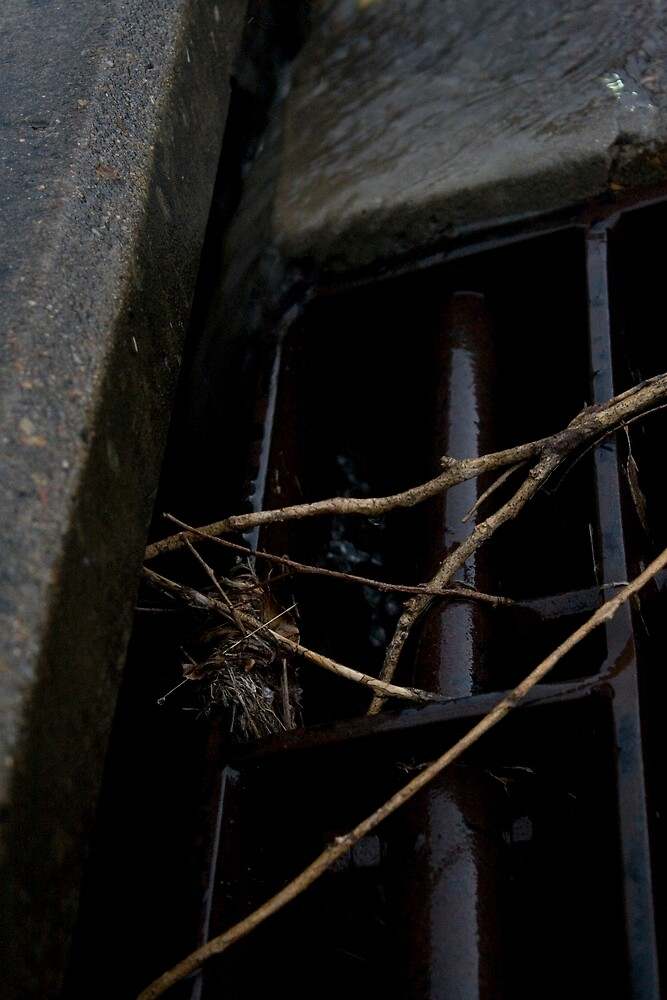 Caught in a Drain by Bec Randall