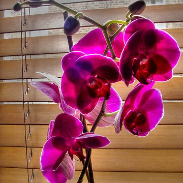 Red Orchids by DickPountain
