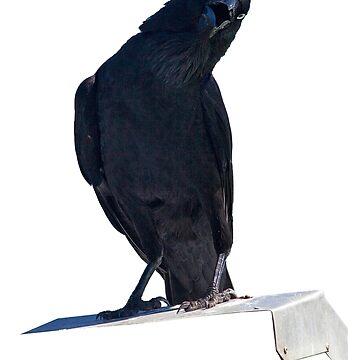 Crow by RusticShiraz