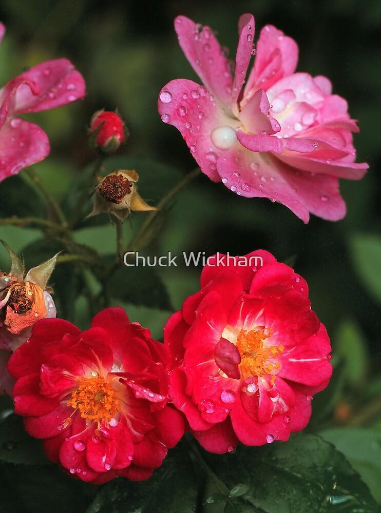WILD ROSE by Chuck Wickham