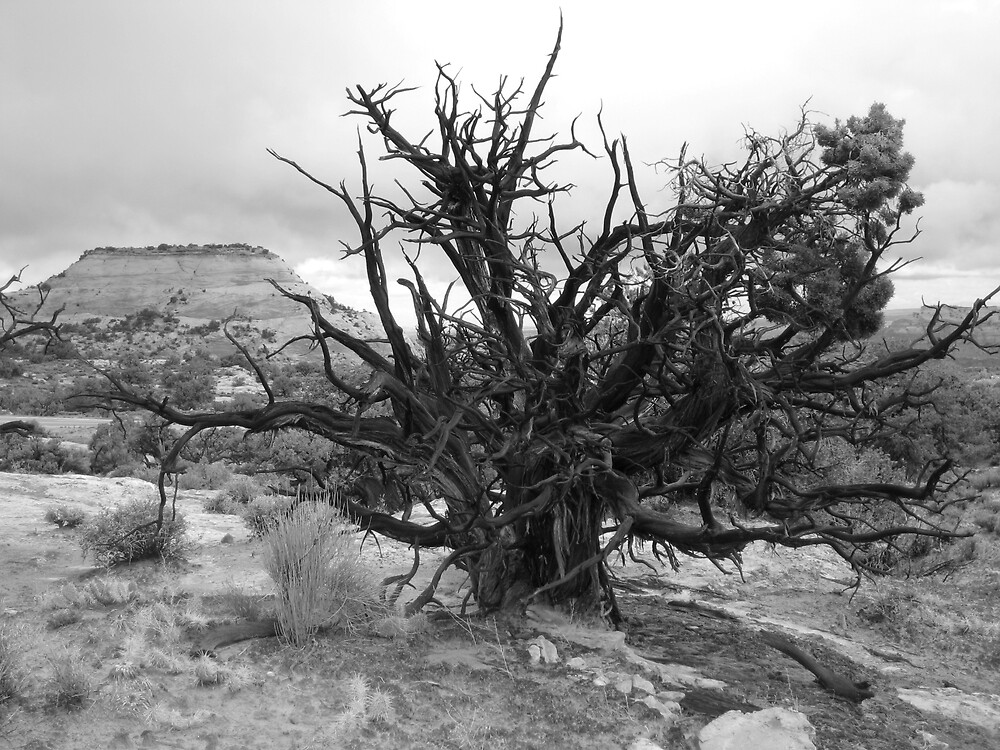 Old Tree by charlesnixon