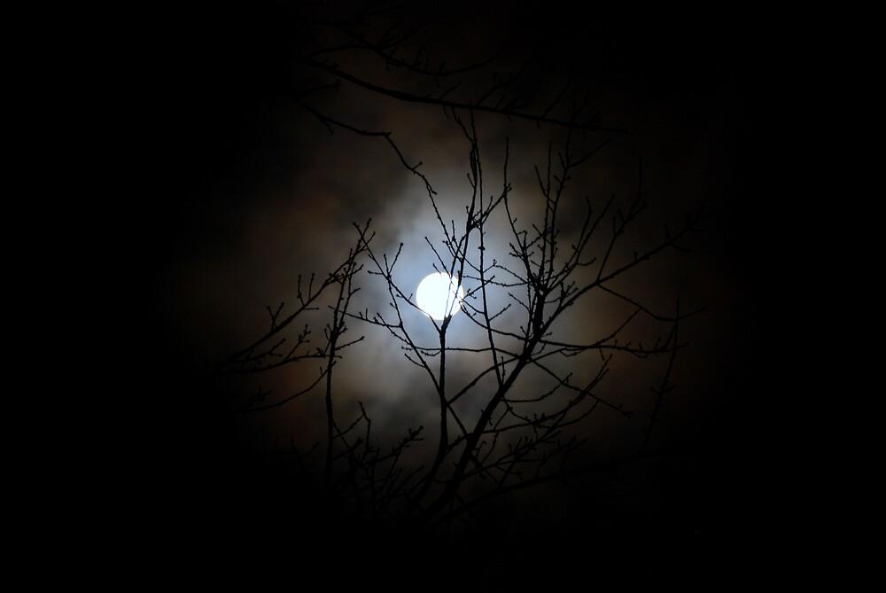 Burning Through Branches at Night by charlesnixon