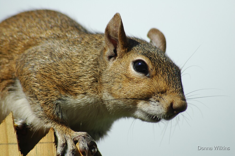 Squirrely II by Donna Wilkins