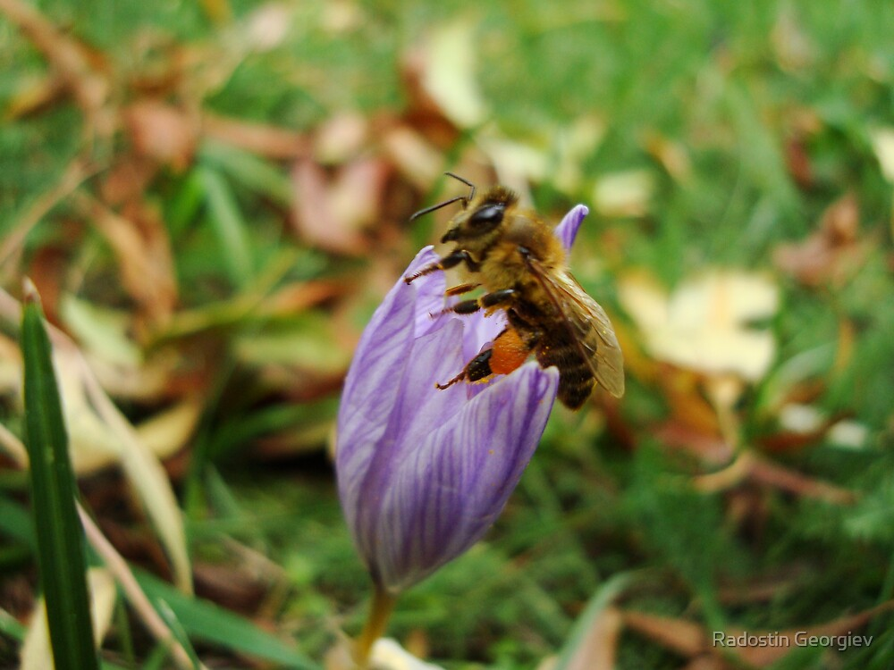 Worker-bee by Radostin Georgiev