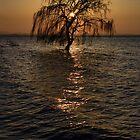 Impressioni del Lago Trasimeno by Andrew Jones