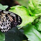 Miss London Butterfly :) by Bumchkin