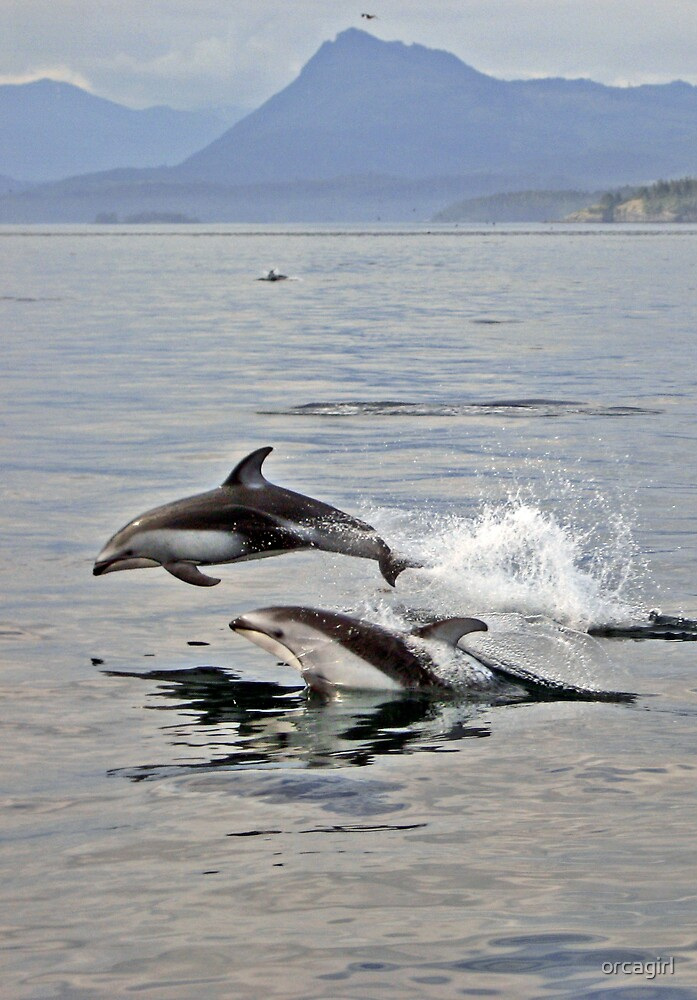 Pacific White Sided Dolphins by orcagirl