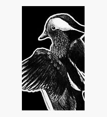 Leucism: Mandarin Duck Photographic Print