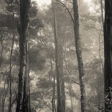 Barrington Mist by MelBrackstone