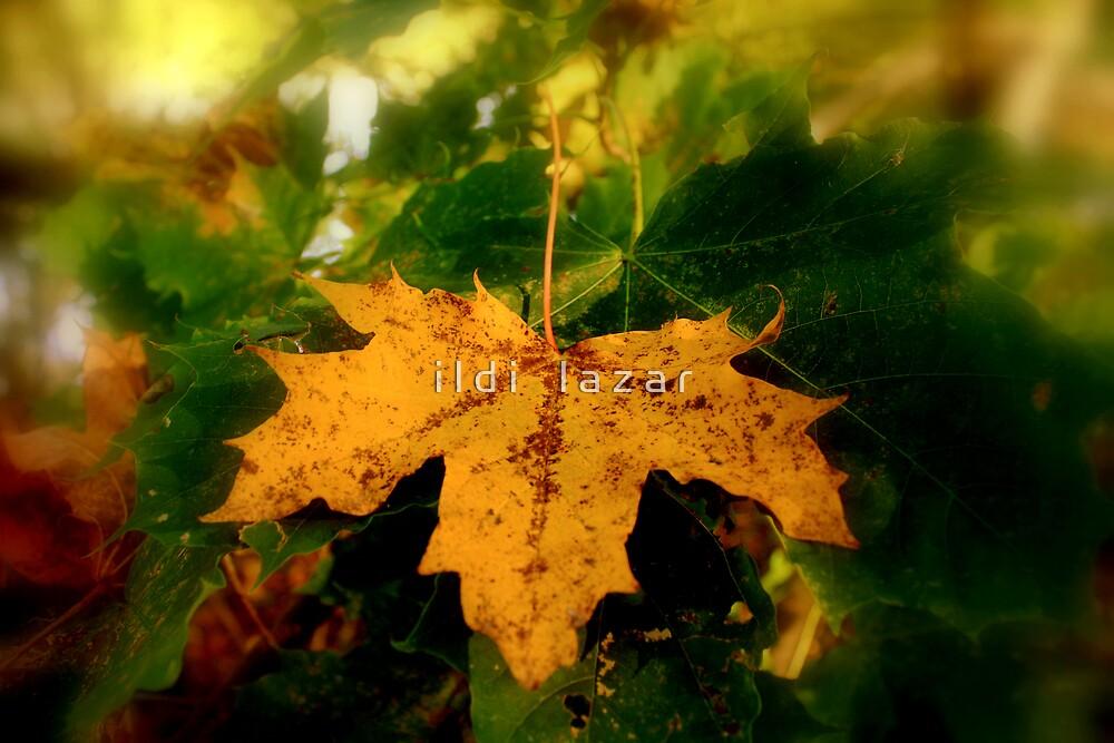 Yellow leaf by i l d i    l a z a r