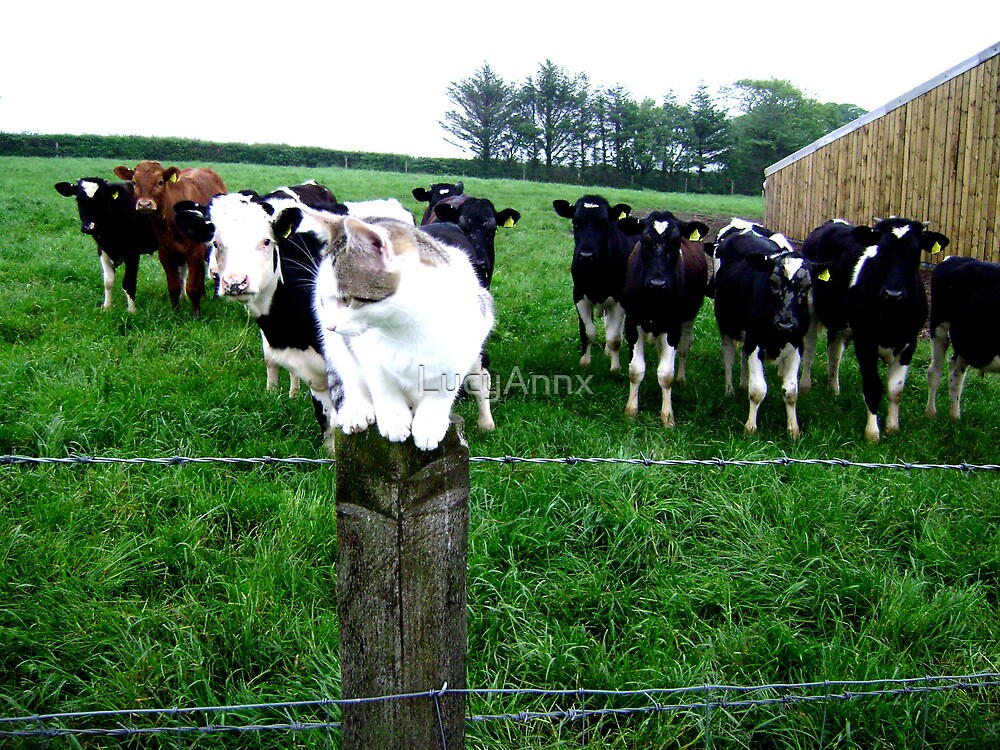 Cat & Cows by LucyAnnx