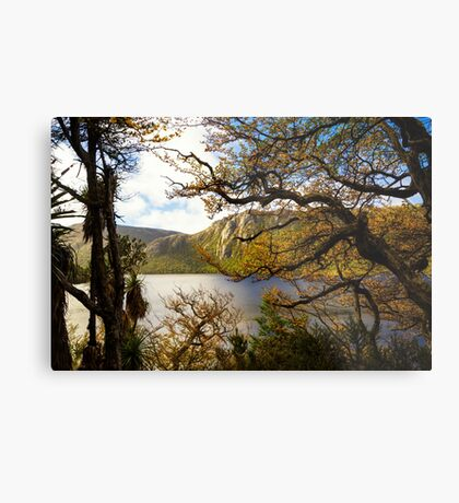 The beautiful Fagus Metal Print