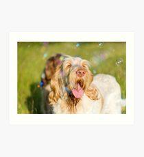 Soap Film - Orange and White Italian Spinone Dog Head Shot with Bubbles Art Print