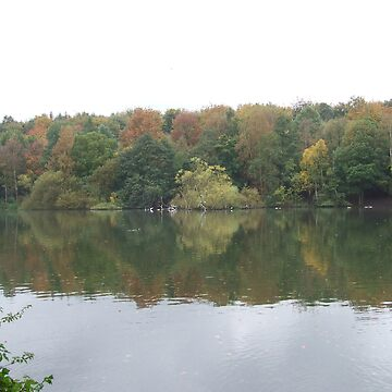 Autumn leaves at Newmillerdam by barnsleysteve