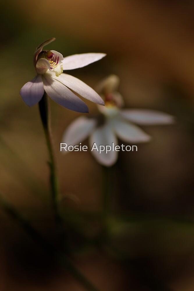 """Pink Fingers Orchid """"Petalochilus carnea"""" #3 by Rosie Appleton"""
