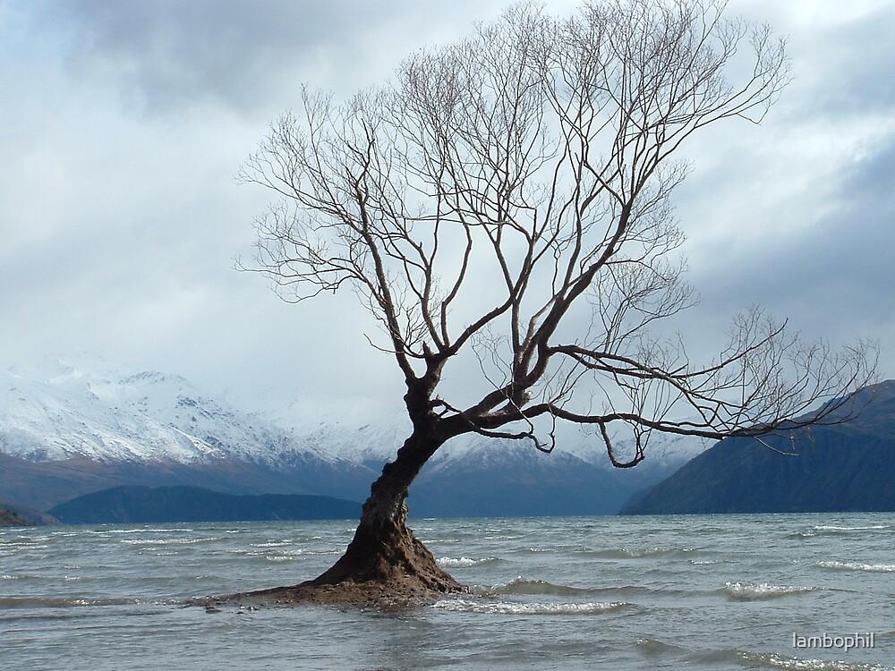 Tree On Lake Wanaka by lambophil