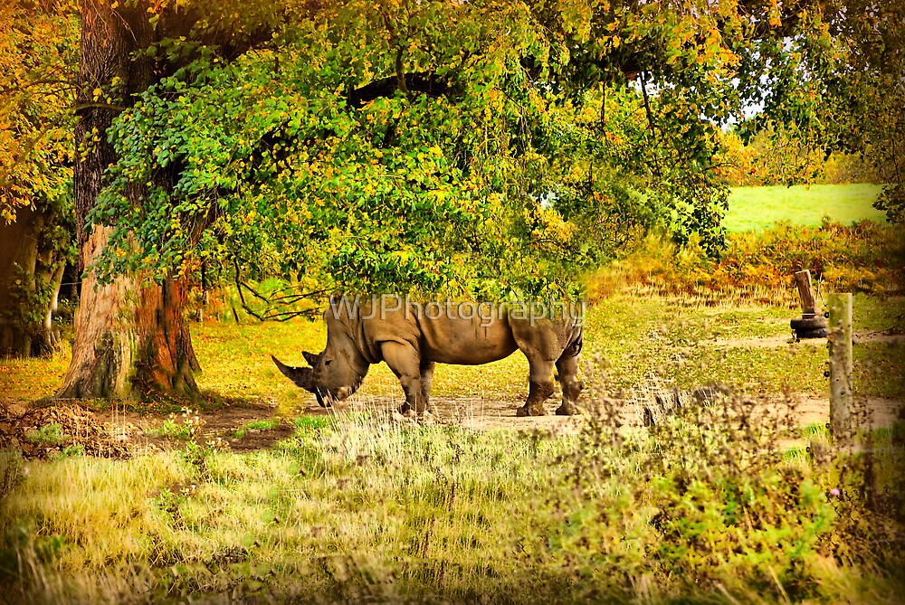 Autumn Rhino by WJPhotography