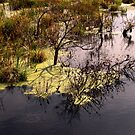 Swamp . by Saulite2