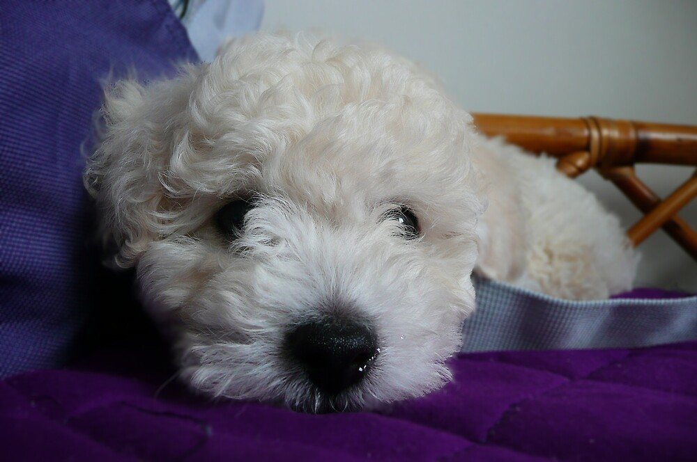 my sister's puppy by florch