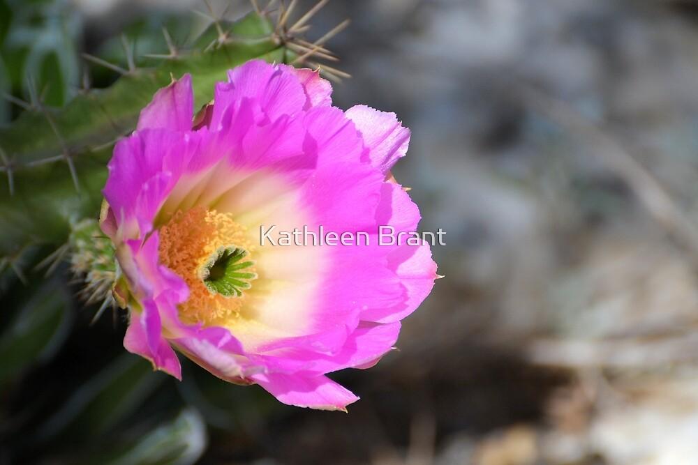 Shocking Pink by Kathleen Brant