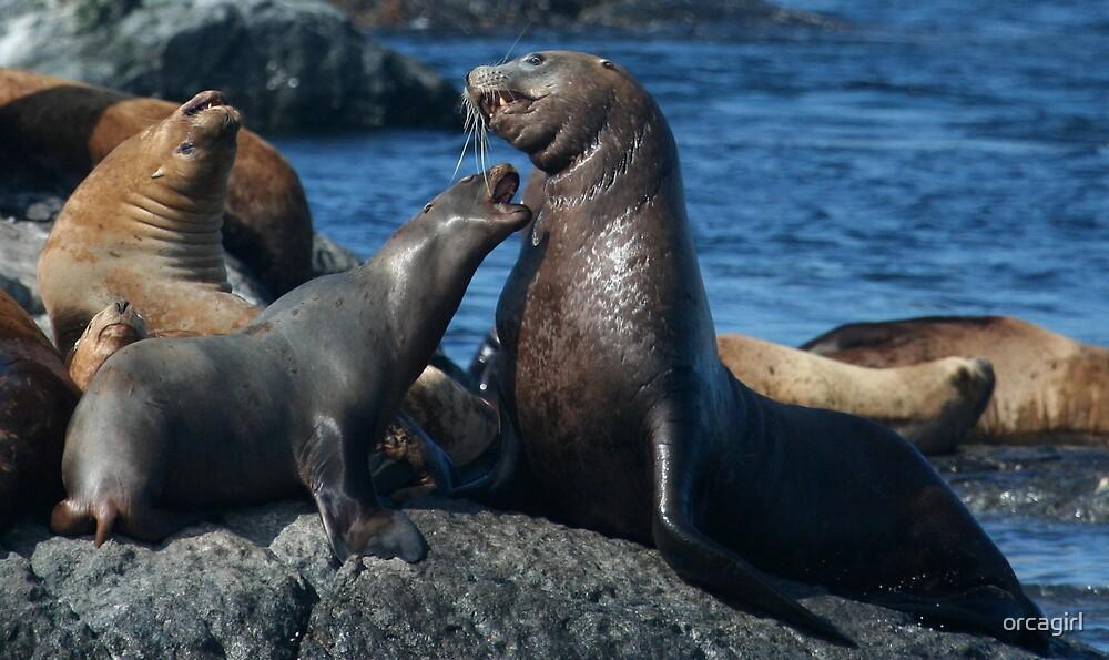 Sealions by orcagirl
