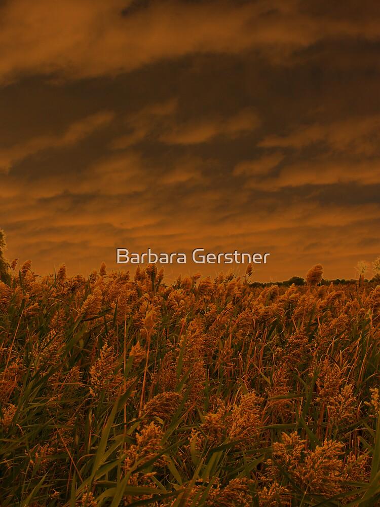 Stormglow by Barbara Gerstner