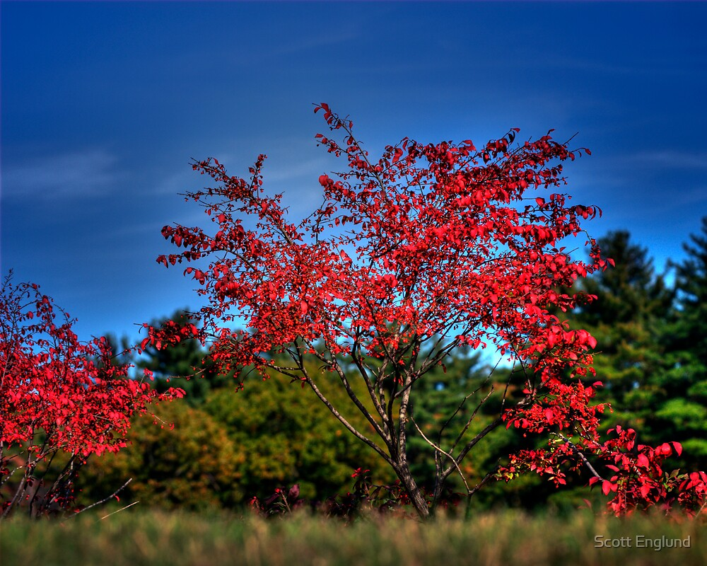 Burning Bush by Scott Englund