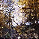 The Leaves are Falling... by mwmclaren