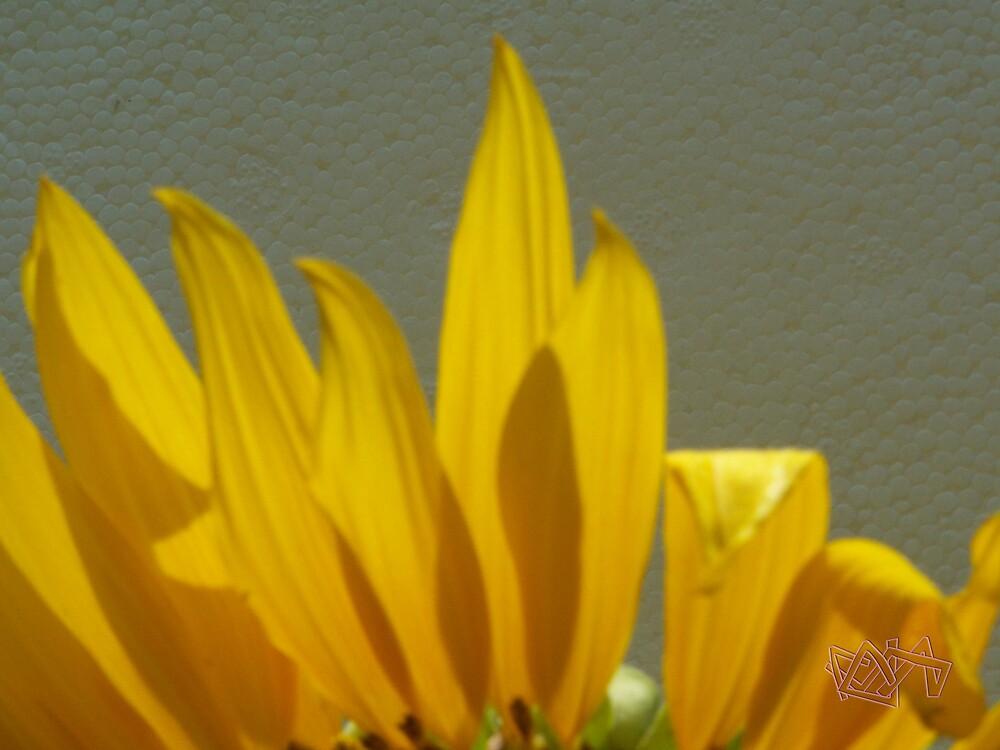 Sunflower by purplestar