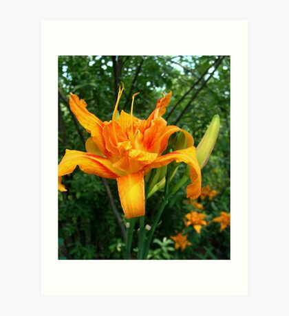 Day Lilly. Art Print