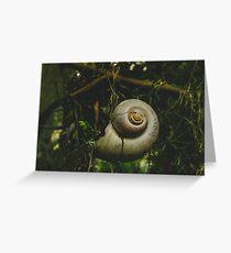Shell-shocked Greeting Card