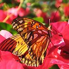 Monarch butterfly by jsmusic