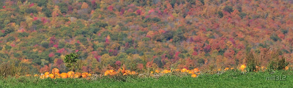 Vermont Pumpkins by mill312