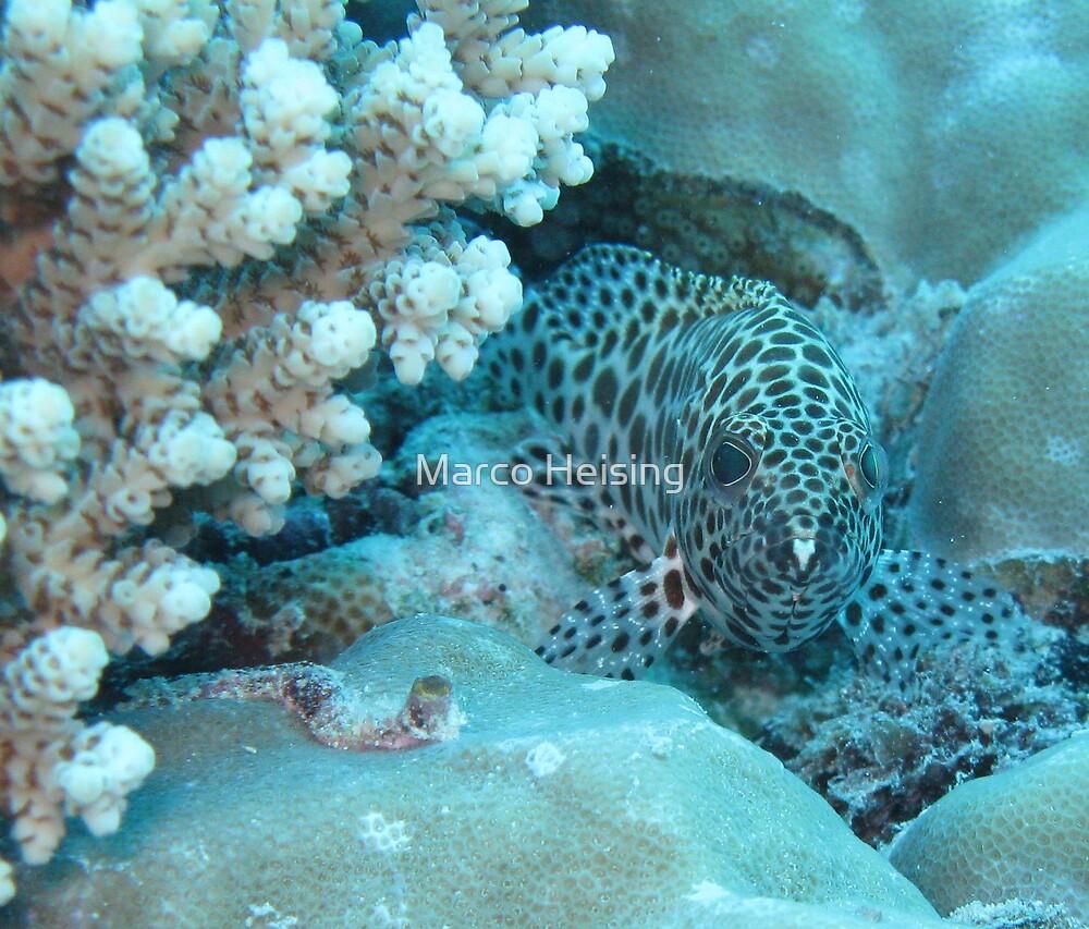 Milin Reef Beauty by Marco Heising
