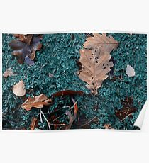 puddle in autumnous forest Poster